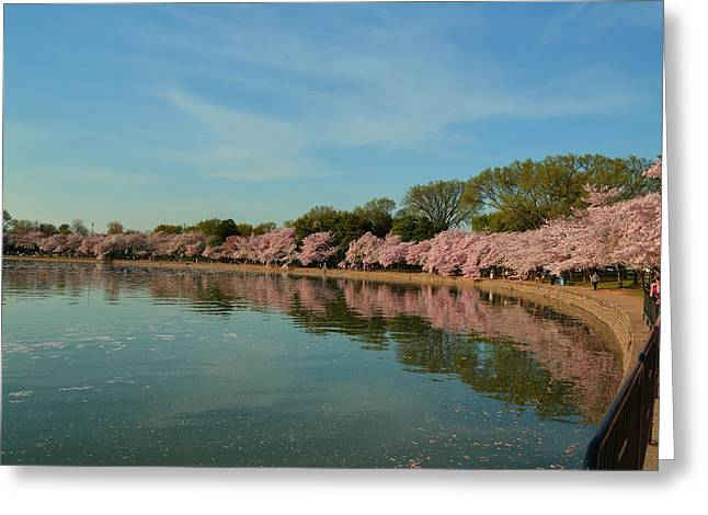 Cherry Blossoms 2013 - 087 Greeting Card
