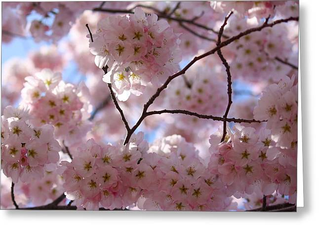 Cherry Blossoms And Blue Sky-1 Greeting Card