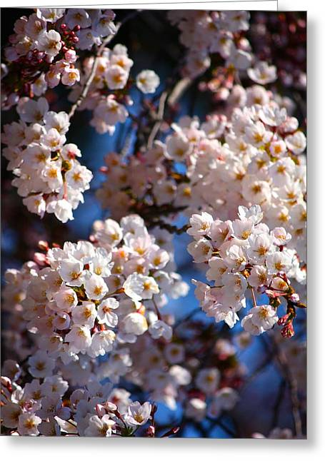 Cherry Blossoms And Blue Sky-2 Greeting Card