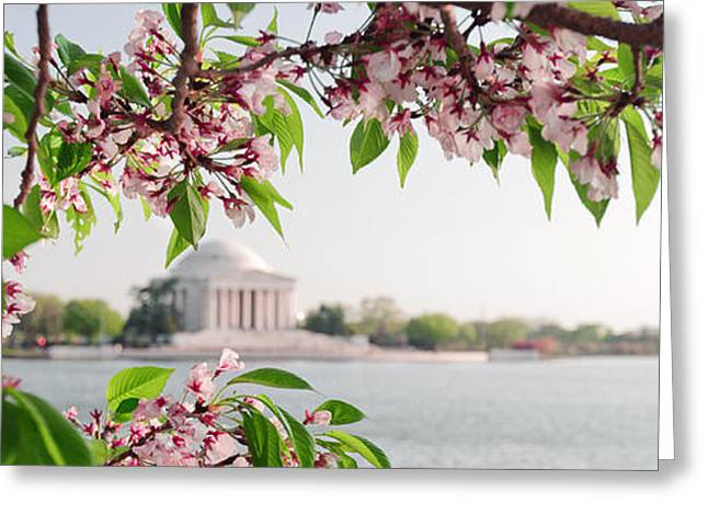 Greeting Card featuring the photograph Cherry Blossoms And The Jefferson Memorial Panorama by Mitchell R Grosky