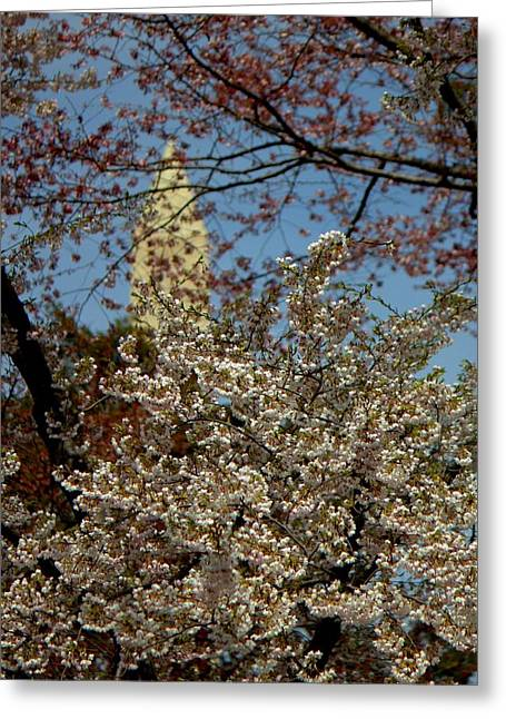 Cherry Blossoms And The Monument Greeting Card