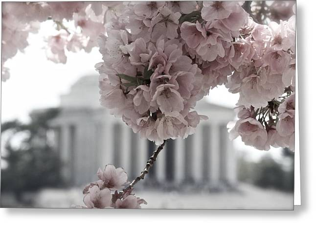 Cherry Blossoms At Jefferson Memorial Greeting Card