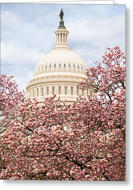 Cherry Blossoms At The Capitol Building Greeting Card