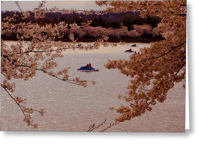 Cherry Blossoms  Greeting Card by DustyFootPhotography