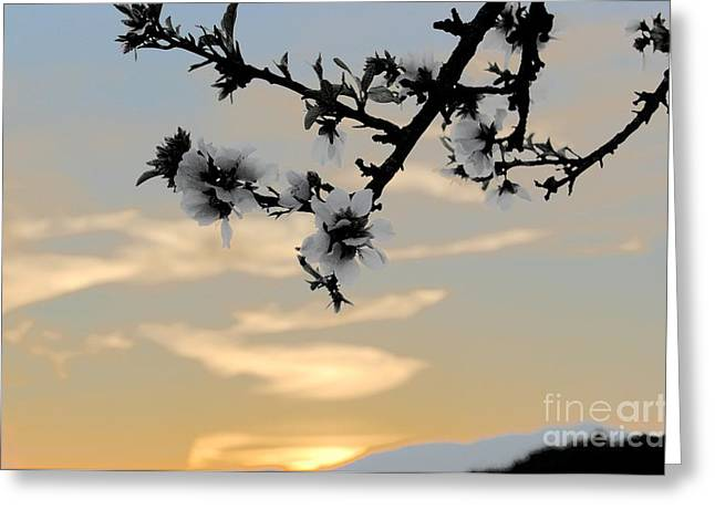 Cherry Blossoms Greeting Card by Jordan Rusin