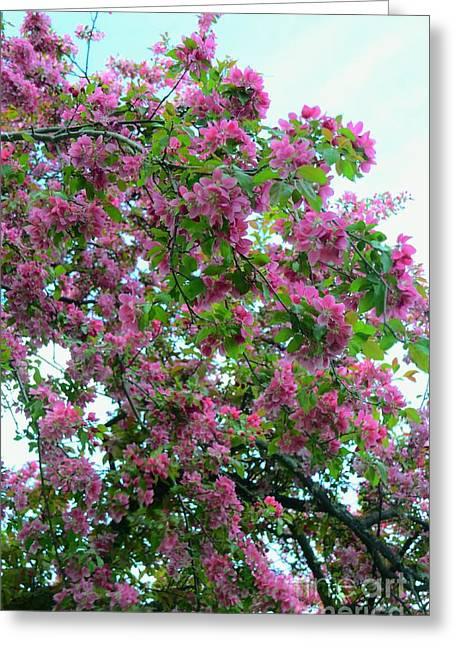 Cherry Blossoms  Greeting Card by Kathleen Struckle