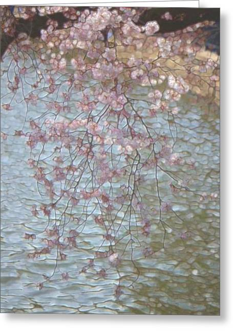 Cherry Blossoms P2 Greeting Card