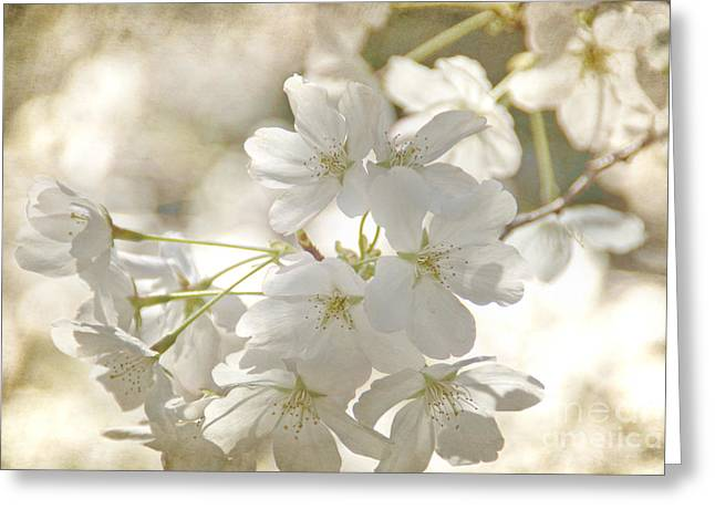 Cherry Blossoms Greeting Card by Peggy Hughes