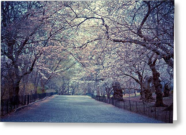 Central Greeting Cards - Cherry Blossoms - Spring - Central Park Greeting Card by Vivienne Gucwa