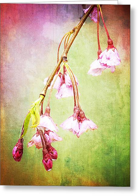 Cherry Blossoms Greeting Card by Vicki Jauron