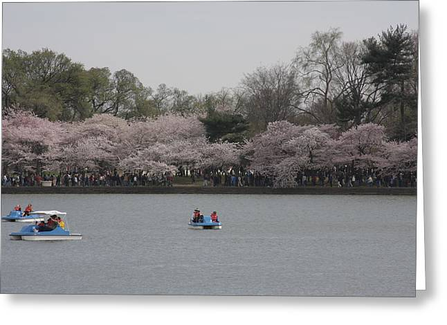 Cherry Blossoms - Washington Dc - 011310 Greeting Card by DC Photographer