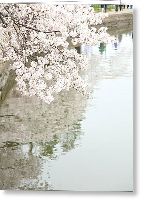 Cherry Blossoms - Washington Dc - 0113105 Greeting Card by DC Photographer