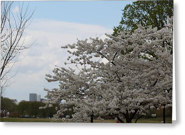 Cherry Blossoms - Washington Dc - 011347 Greeting Card by DC Photographer