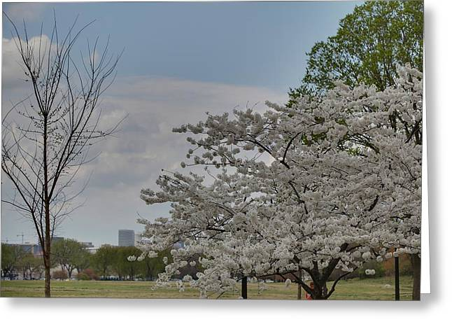 Cherry Blossoms - Washington Dc - 011348 Greeting Card by DC Photographer
