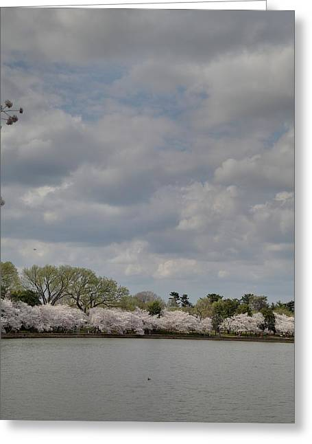 Cherry Blossoms - Washington Dc - 011365 Greeting Card by DC Photographer