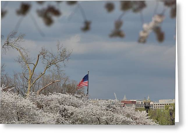 Cherry Blossoms - Washington Dc - 011381 Greeting Card by DC Photographer
