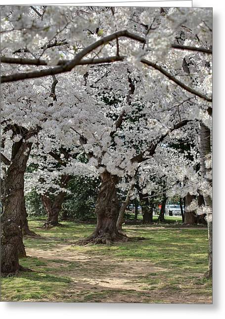 Cherry Blossoms - Washington Dc - 011382 Greeting Card by DC Photographer