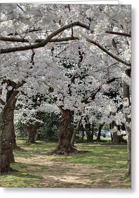 Cherry Blossoms - Washington Dc - 011384 Greeting Card by DC Photographer