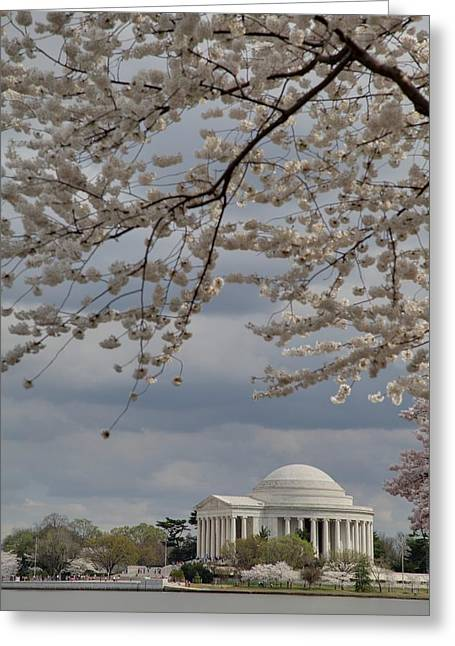 Cherry Blossoms With Jefferson Memorial - Washington Dc - 011313 Greeting Card by DC Photographer