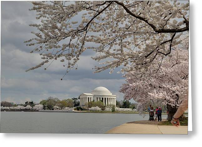 Cherry Blossoms With Jefferson Memorial - Washington Dc - 011317 Greeting Card by DC Photographer