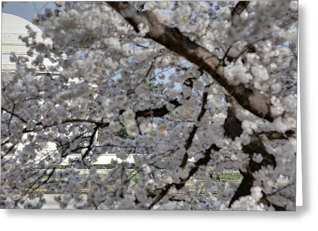 Cherry Blossoms With Jefferson Memorial - Washington Dc - 011333 Greeting Card by DC Photographer