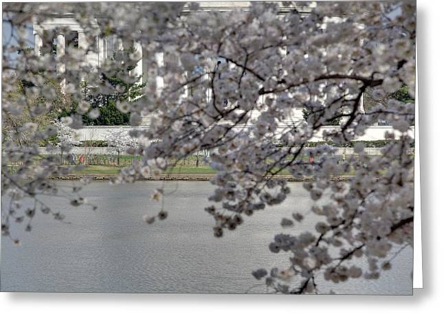Cherry Blossoms With Jefferson Memorial - Washington Dc - 011337 Greeting Card by DC Photographer
