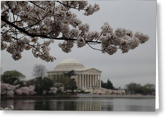 Cherry Blossoms With Jefferson Memorial - Washington Dc - 011345 Greeting Card by DC Photographer