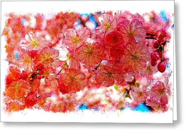 Cherry Blossums Greeting Card