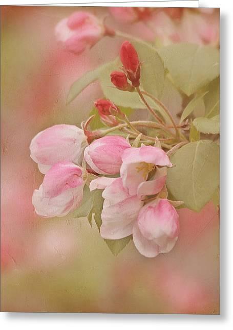 Cherry Buds Greeting Card by Kim Hojnacki