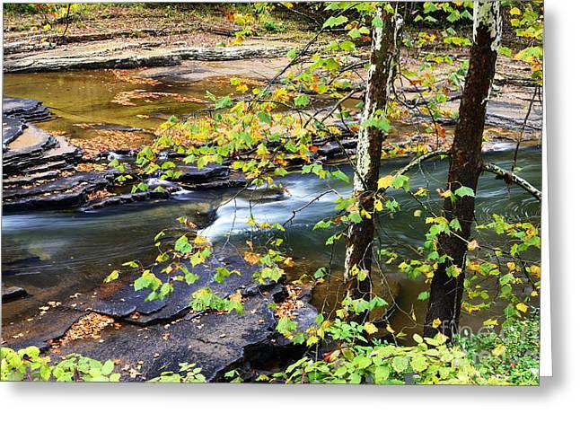 Cherry Falls Elk River Greeting Card by Thomas R Fletcher