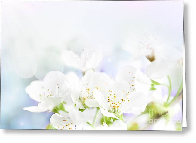 Cherry Flowers Greeting Card by Mythja  Photography