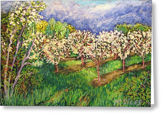 Cherry Orchard Glow Greeting Card by Madonna Siles