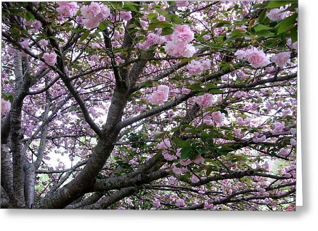 Cherry Tree 3 Greeting Card by Mimi Saint DAgneaux
