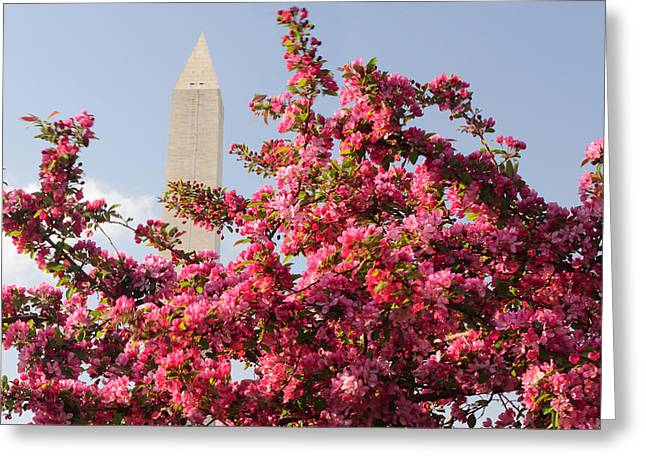 Greeting Card featuring the photograph Cherry Trees And Washington Monument 5 by Mitchell R Grosky