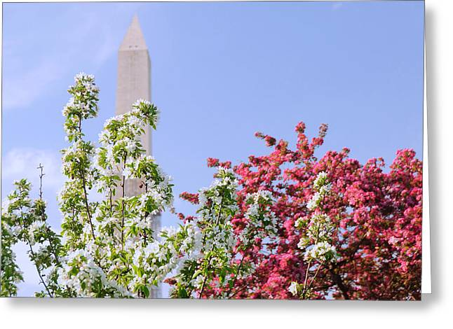 Cherry Trees And Washington Monument Four Greeting Card