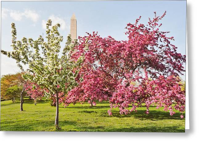 Cherry Trees And Washington Monument Three Greeting Card by Mitchell R Grosky