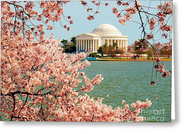 Cherry Trees At The Jefferson Greeting Card