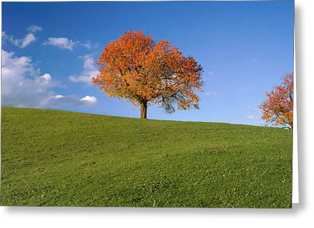 Cherry Trees On A Hill, Cantone Zug Greeting Card by Panoramic Images