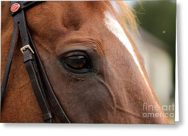 Chestnut Horse Eye Greeting Card