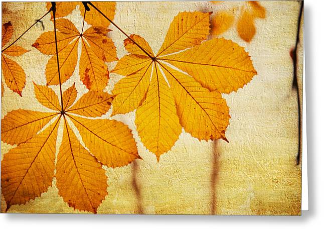 Chestnut Leaves At Autumn Greeting Card by Jenny Rainbow