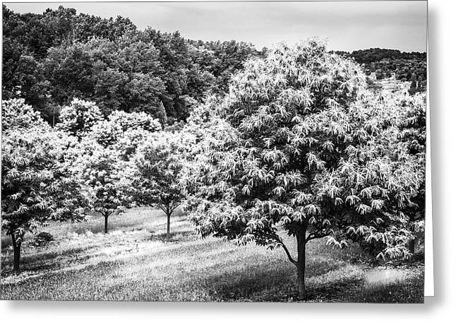 Chestnut Trees In Spring Greeting Card by Georgia Fowler