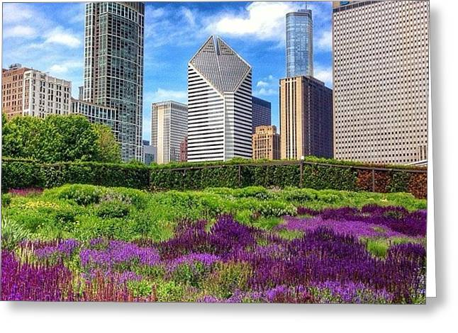 Chicago Skyline At Lurie Garden Greeting Card