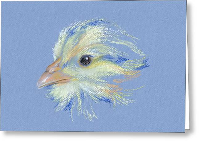 Chick - Plymouth Barred Rock Greeting Card
