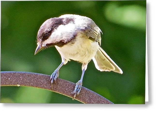 Chickadee 102 Greeting Card by Patsy Pratt