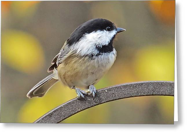Chickadee 104 Greeting Card by Patsy Pratt