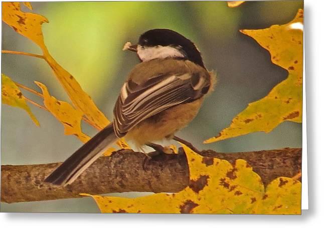 Chickadee 105 Greeting Card by Patsy Pratt
