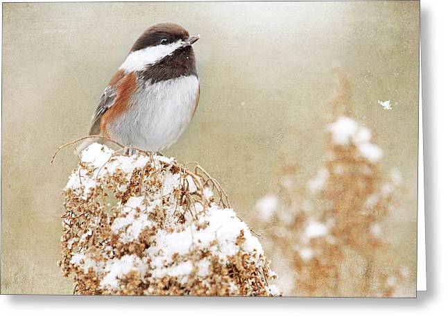 Chickadee And Falling Snow Greeting Card