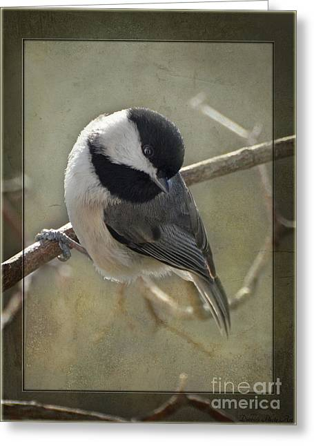 Chickadee Early Bird I Greeting Card by Debbie Portwood