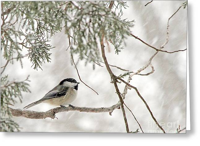 Chickadee In Snowstorm Greeting Card