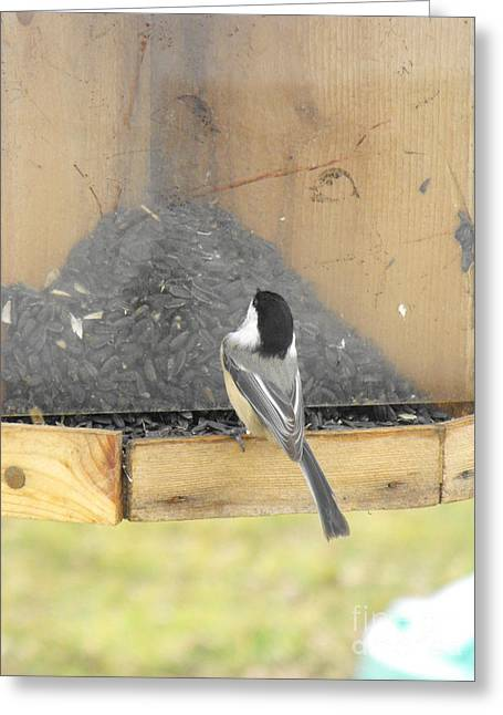 Chickadee Eating Lunch Greeting Card